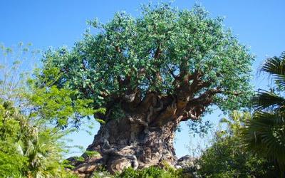 Walt Disney World Touring Tip: Off the Beaten Track at Animal Kingdom