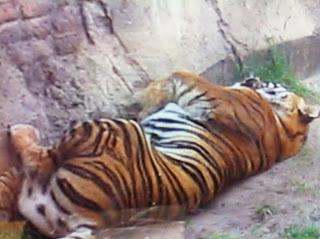 Into the Wild – Maharajah Jungle Trek at Disney's Animal Kingdom
