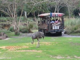 Best Time to Ride Walt Disney World's Kilimanjaro Safari