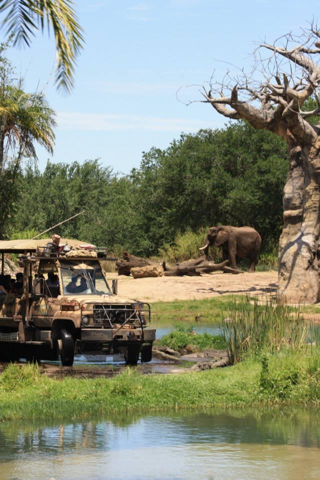 Tips for the Kilimanjaro Safari at Walt Disney World