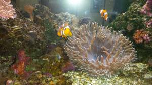 STEAM Finding Nemo activities- Why not take a field trip to your local aquarium and find Nemo?