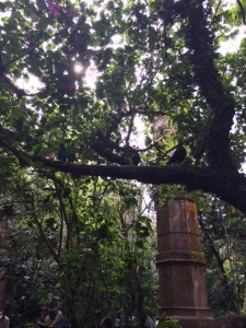 maharajah jungle trek 14