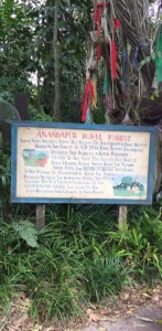 maharajah jungle trek 2