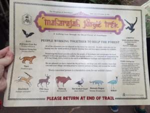 maharajah jungle trek 4