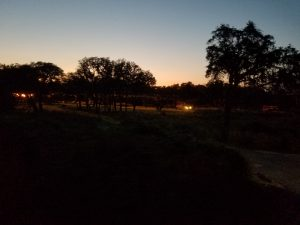 The view of the savanna
