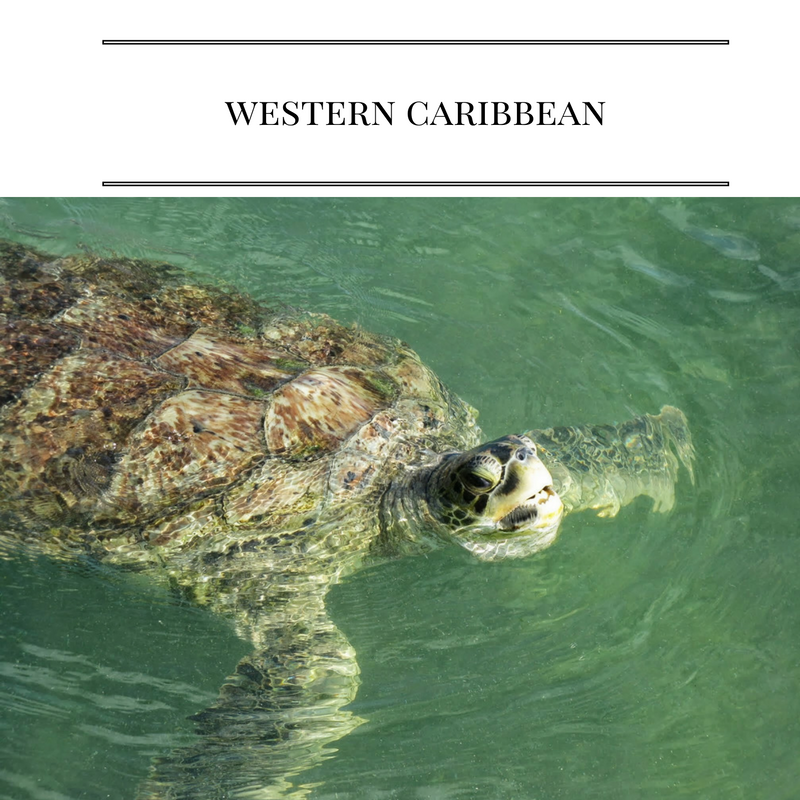 Tips for going on a Disney Cruise to the Western Caribbean!