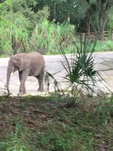 kilimanjaro-safaris-elephant