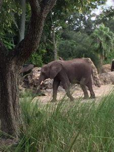 kilimanjaro-safaris-elephant2