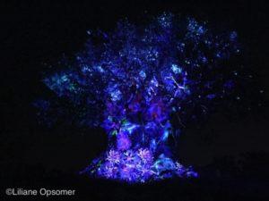 tree-awakening4