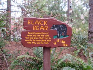 Why Your Preschooler Will Run to Redwood Creek Challenge Trail at Disney's California Adventure