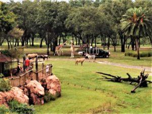 Animal Kingdom lodge savannah view, Disney Resort / 5 Reasons Why I'll Never Stay Off Disney Property Again