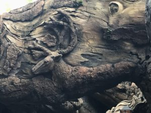 Carving at base of Animal Kingdom's Tree of Life