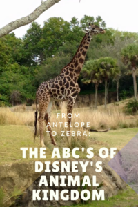 Animal Kingdom ABC's