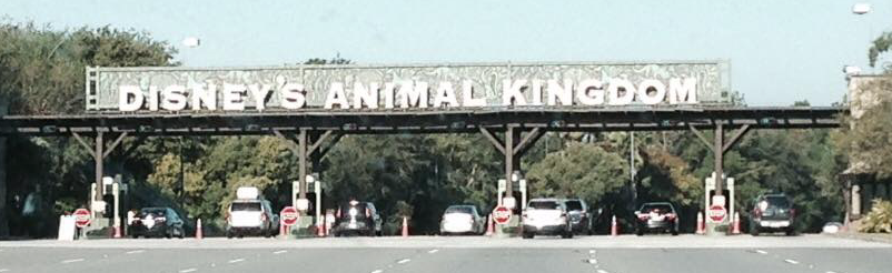 From Antelope to Zebra: The ABC's of Disney's Animal Kingdom