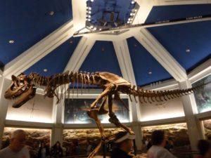 Dinosaur ride, Animal Kingdom park, rides kids love, rides parents hate