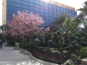 Disneyland Hotel in February