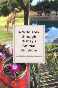A Wild Trek through Disney's Animal Kingdom