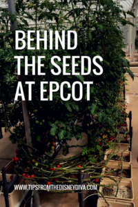 Behind the Seeds at Epcot - Tips from the Disney Diva