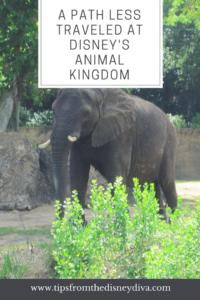 A Path Less Traveled at Disney's Animal Kingdom