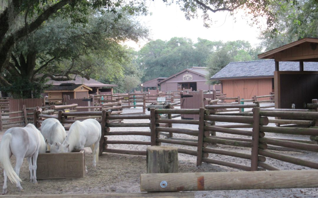 "Let Your Preschooler ""Horse"" Around at Walt Disney World: Take a Pony Ride!"