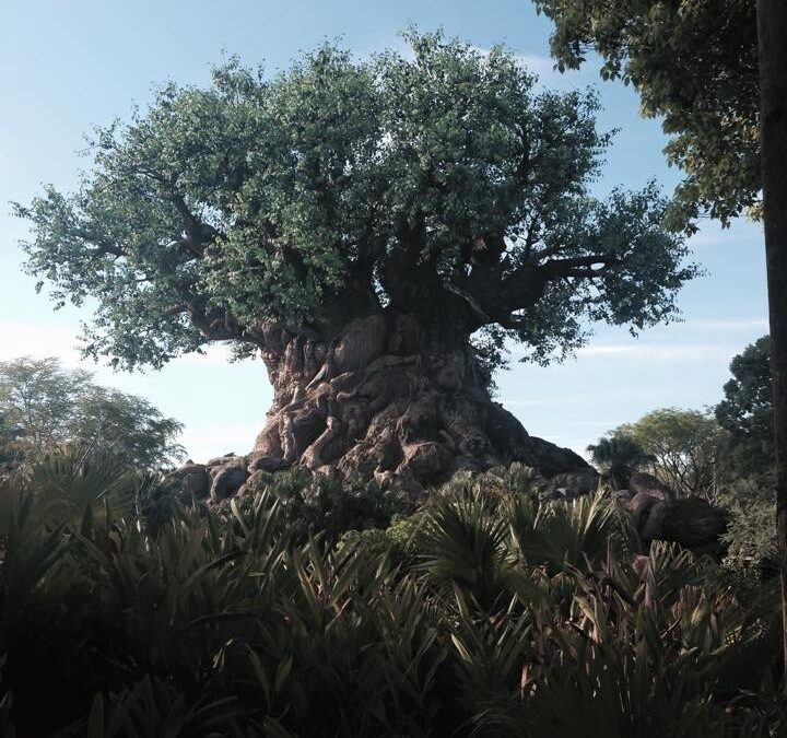 Five First-Timer Tips for Surviving Animal Kingdom