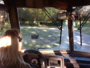 kilimanjaro safaris driver