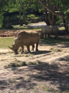 rhinos on kilimanjaro safaris