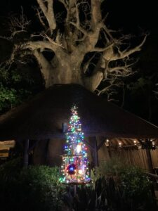 HOLIDAY HAPPENINGS at ANIMAL KINGDOM