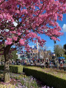 Disneyland in the Spring